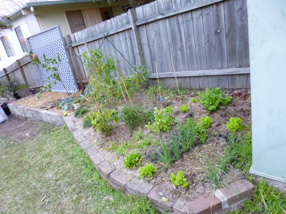 Gourmet Wog raised garden bed