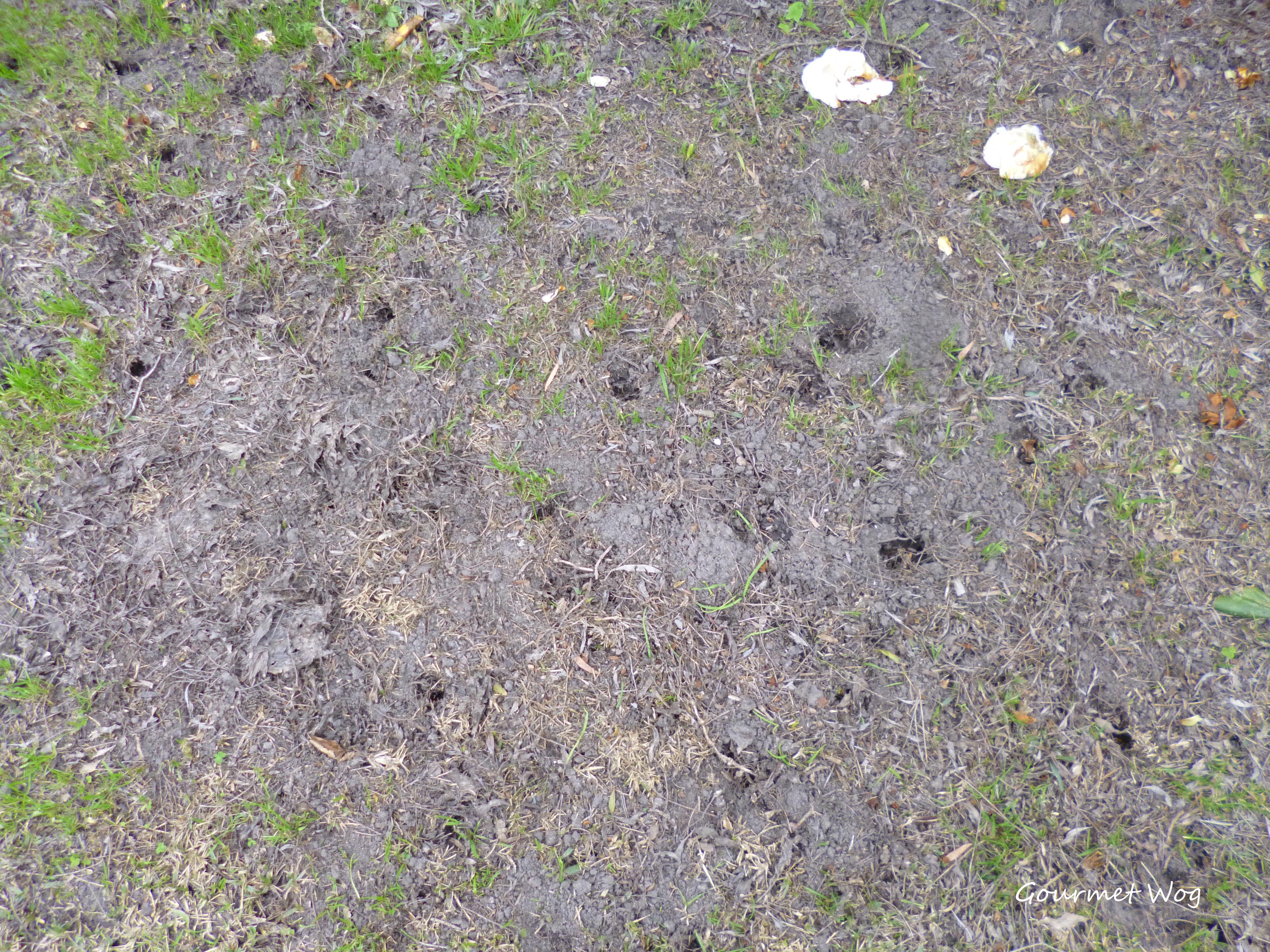 Gardener digs a hole
