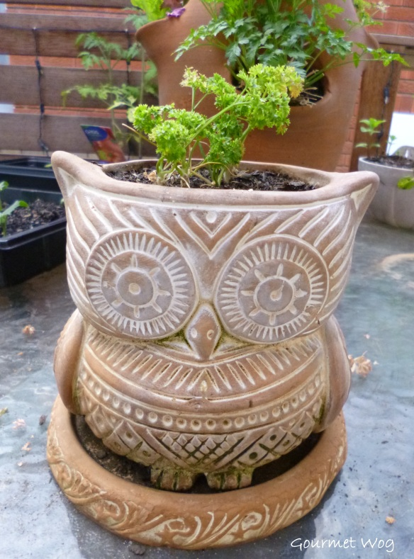 hoot owl planter pot with parsley hair